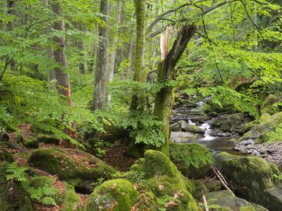 https://imgc.allpostersimages.com/img/posters/steinklamm-spiegelau-the-bavarian-forest-bavaria-germany_u-L-Q1EY0NG0.jpg?artPerspective=n