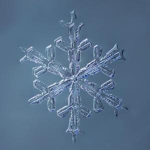 Stellar Dendrite Snowflake