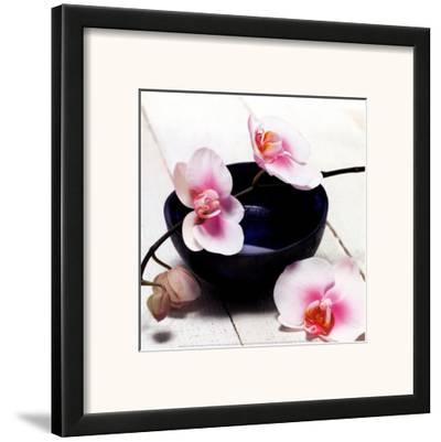 Orchid in a Bowl by Stephane De Bourgies