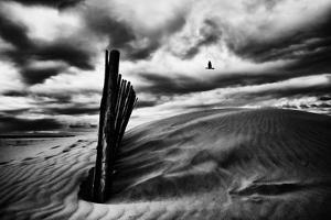 Le Soir by Stephane Pecqueux