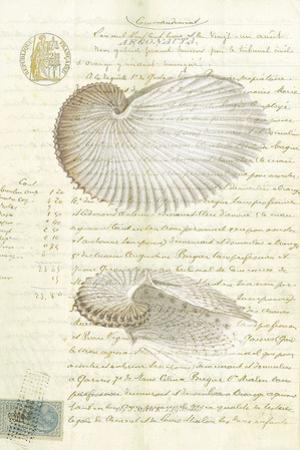 Conchology Sketch I by Stephanie Monahan