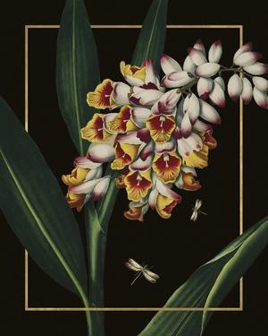 Ornamental - Picardy Luxe by Stephanie Monahan