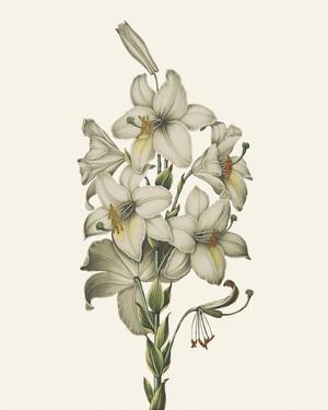 Ornamental Pure - Tournel by Stephanie Monahan