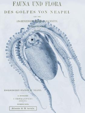 Sea Creatures - Forio by Stephanie Monahan
