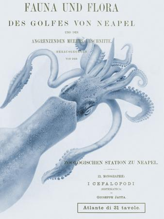 Sea Creatures - Napoli by Stephanie Monahan