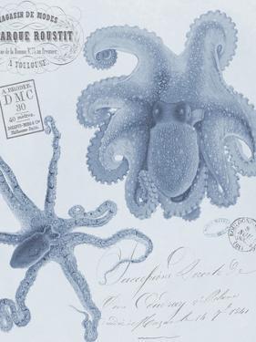 Sea Creatures - Positano by Stephanie Monahan