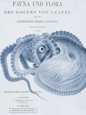 Sea Creatures - Ravello by Stephanie Monahan
