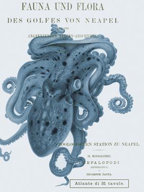 Sea Creatures - Salerno by Stephanie Monahan