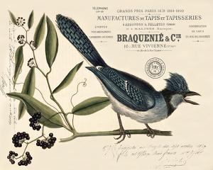 Vintage Bird - Avignon by Stephanie Monahan