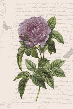 Vintage Flower II by Stephanie Monahan