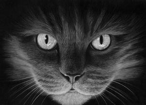 Hypno Cat by Stephen Ainsworth