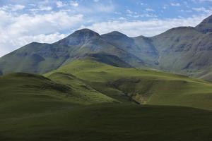Nguli Cows Graze on High Pasture in the Drakensberg Mountains by Stephen Alvarez