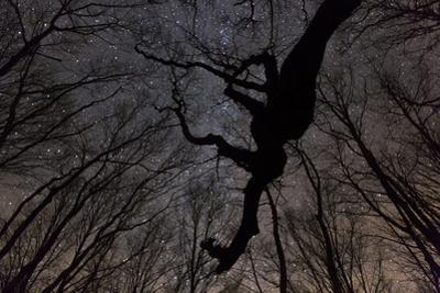 Oak trees at night under a starry sky along the Cherohala Skyway, North Carolina. by Stephen Alvarez