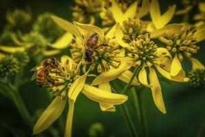 Bees on Flowers by Stephen Arens