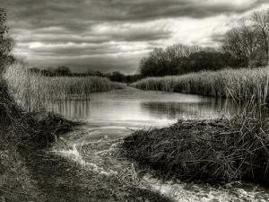 Flood Lines by Stephen Arens
