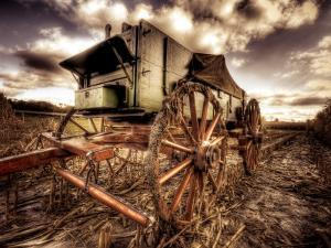 Harvest by Stephen Arens