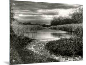 Reeds in Winter by Stephen Arens