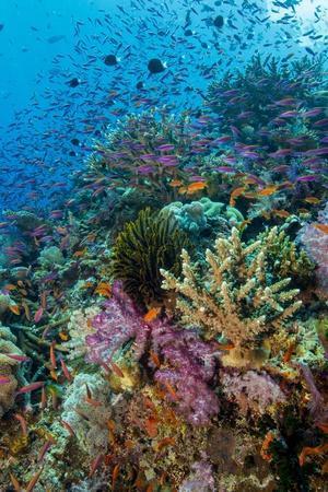 Abundance of Marine Life on a Coral Reef.