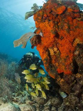 Technical Diver on Coral Reef. by Stephen Frink