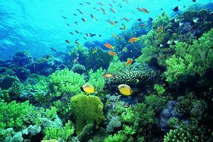 Tropical Fish Swimming over Reef by Stephen Frink