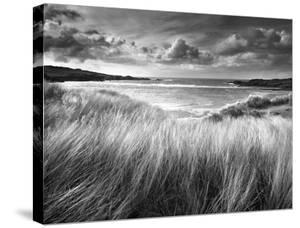 Sea Grass by Stephen Gassman