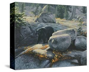 Boulder Bruin by Stephen Lyman