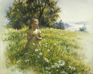 Daisy Meadow by Stephen Pearson