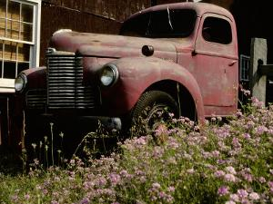 Crown Vetch Flowers, a Barn, and a Vintage Truck Add Local Color by Stephen St. John