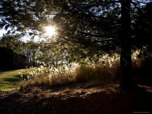Evening Sun Backlights Serene Local Parkland, Silver Spring, Maryland by Stephen St. John