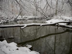 Falling Snow Outlines a Log across Rock Creek During Blizzard of 2010 by Stephen St. John