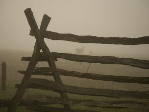 Morning Fog and a Civil War Split-Rail Fence Frame Wild Deer by Stephen St. John