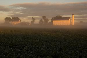 Sunrise Casts a Golden Tint on a Farm and Misty Cornfield by Stephen St. John