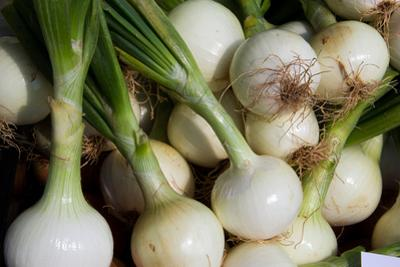 White Onions for Sale, Ready to Add Strong Flavor by Stephen St. John