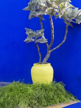 Detail of Potted Plant Against Blue Wall by Stephen Studd