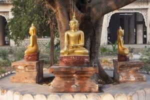 Gold Buddha Statues under Bodhi Tree, Shwezigon Paya (Pagoda), Nyaung U by Stephen Studd