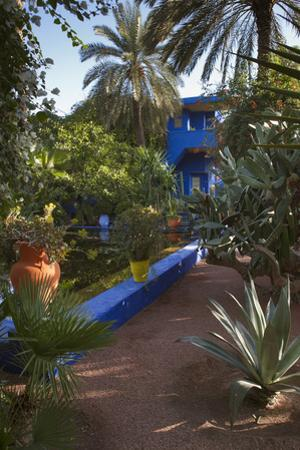 Jardin Majorelle, Owned by Yves St. Laurent, Marrakech, Morocco, North Africa, Africa