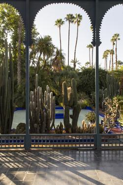 Jardin Majorelle, Owned by Yves St. Laurent, Marrakech, Morocco, North Africa, Africa by Stephen Studd