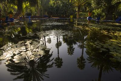 Reflections in Lily Pool, Jardin Majorelle, Owned by Yves St. Laurent, Marrakech, Morocco by Stephen Studd