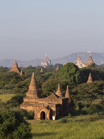 View Towards Old Bagan, with Ananda Temple and Thatbyinnyu Temple, Bagan (Pagan), Myanmar (Burma) by Stephen Studd