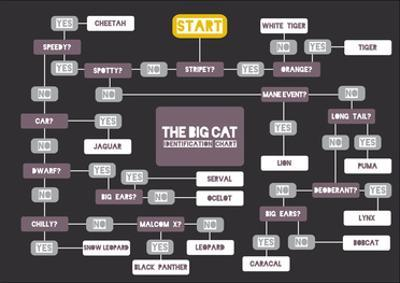 The Big Cat Identification Chart by Stephen Wildish