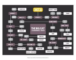 The Big Cat Identification Chart by Stephen Wildish