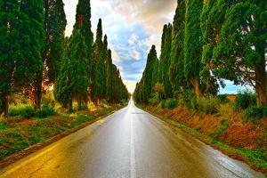 Bolgheri Famous Cypresses Tree Straight Boulevard on Sunset. Maremma, Tuscany, Italy by stevanzz