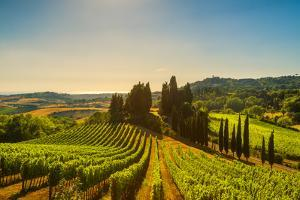 Casale Marittimo Village, Vineyards and Countryside Landscape in Maremma. Pisa Tuscany, Italy Europ by stevanzz