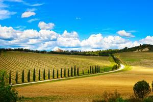 Tuscany, Vineyard, Cypress Trees and Road, Rural Landscape, Italy, Europe by stevanzz