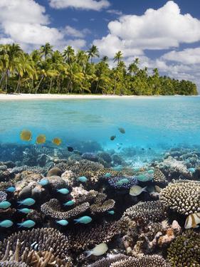 Tropical Paradise - the Maldives by Steve Allen