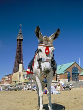 Seaside Donkey on Beach with Blackpool Tower Behind, Blackpool, Lancashire, England by Steve & Ann Toon
