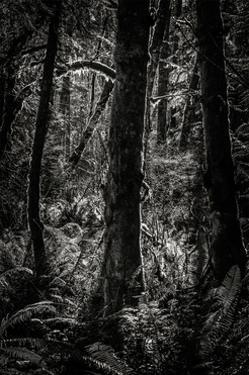 Lowland Winter Forest No 11, Tiger Mountain by Steve Bisig
