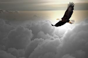 Bald Eagle Flying Above The Clouds by Steve Collender
