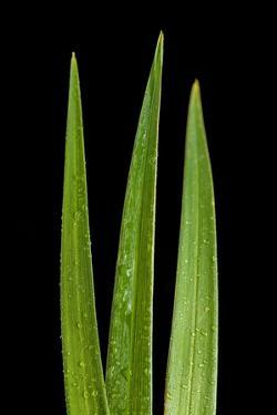 Blades Of Grass by Steve Gadomski