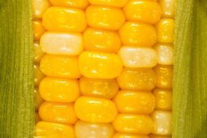 Corn by Steve Gadomski